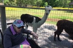 Norma Elmvale Zoo June 2019